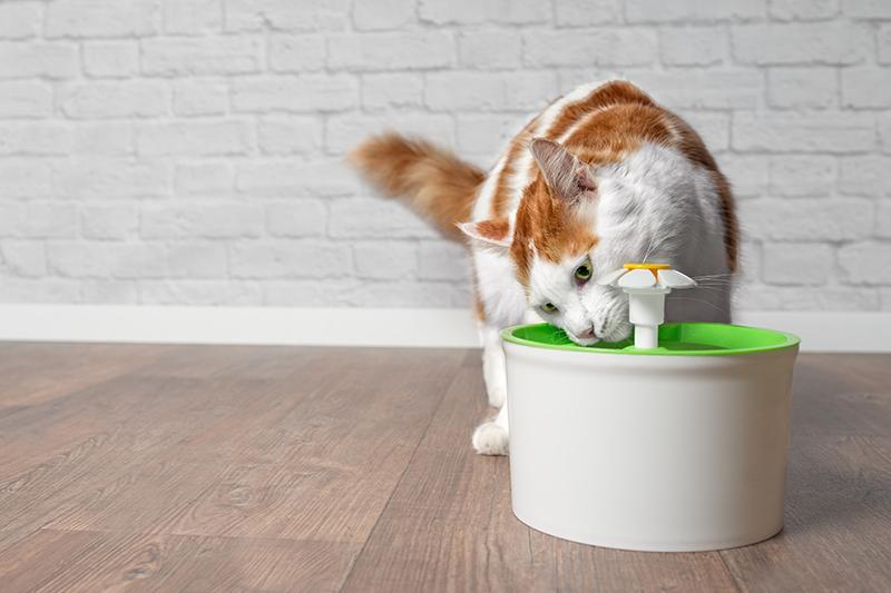 kat water drinken