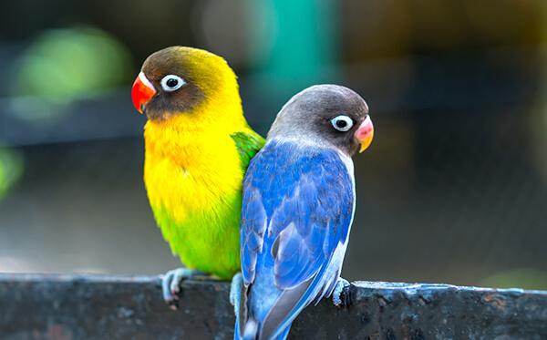 eenzame vogels