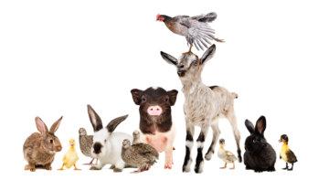 TEST: Welk dier ben jij van binnen?