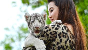 Wilde dieren voor vermaak van toeristen