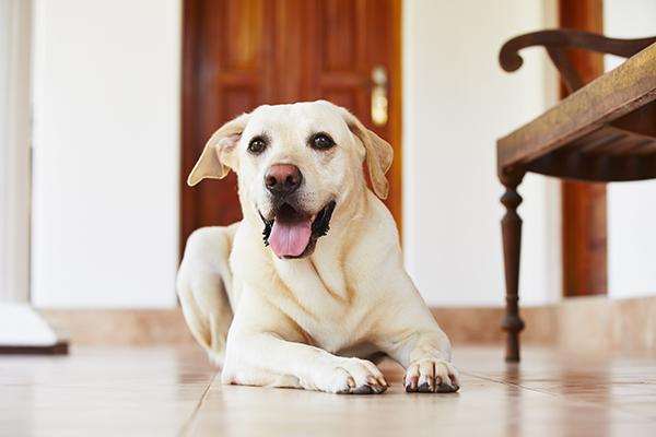 hond alleen thuis