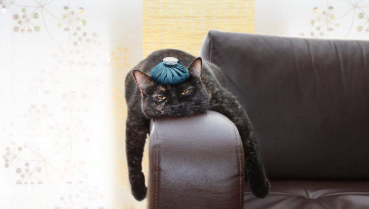 Stress bij katten door thuiswerkende baasjes