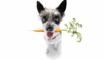 hond duurzaam