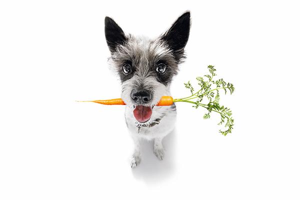 Test: Hoe duurzaam leven jij en je huisdier(en)?