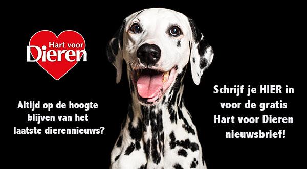 nieuwsbrief hond dieren dierennieuws