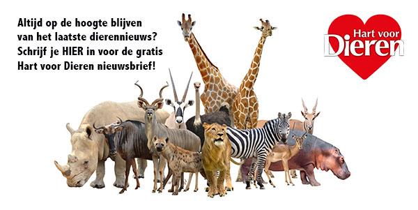 nieuwsbrief dieren wildlife