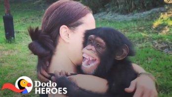 Baby chimpansees redden