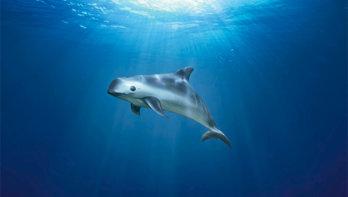 De 10 zeldzaamste dieren