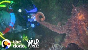 Inktvis onderzoekt duiker