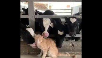Kat krijgt een bijzonder bad