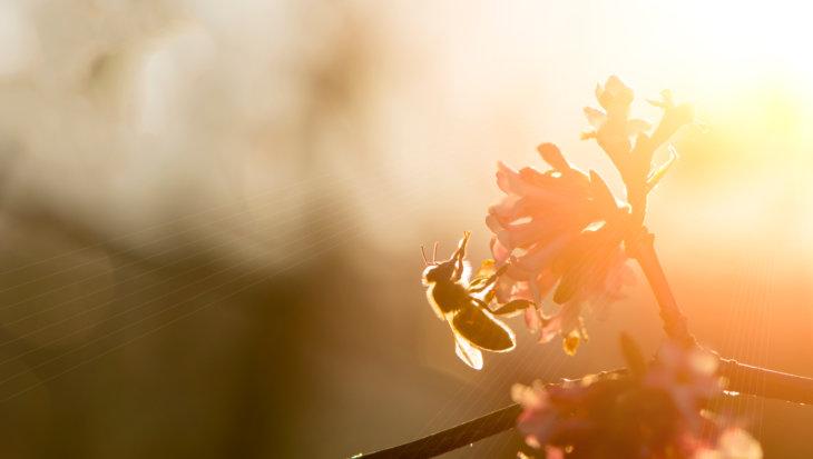 Bijen dansen in dialect!
