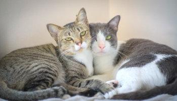 meer katten huis samen leven