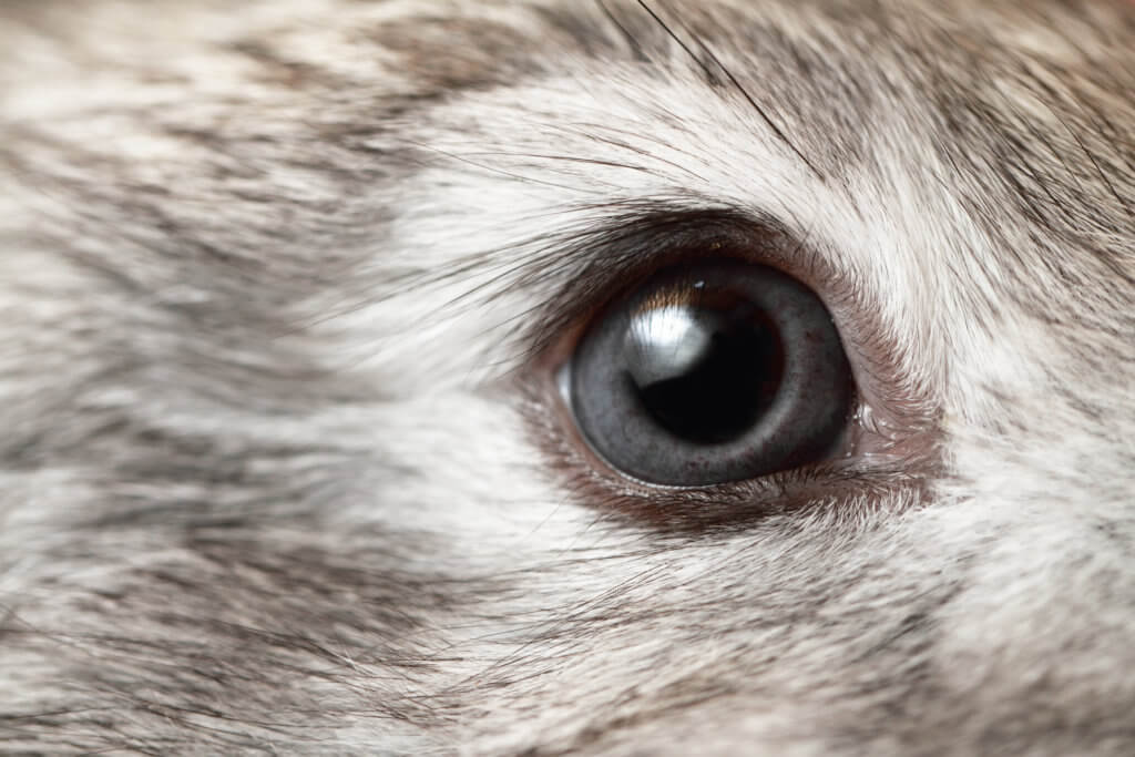 ziek konijn ogen oren neus