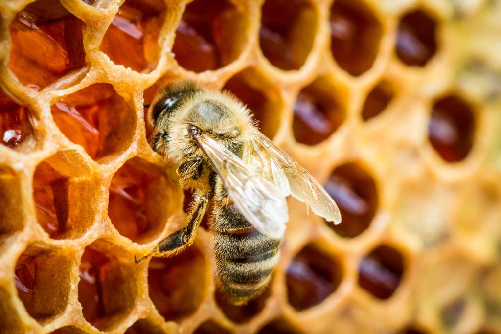 bijen dialect volk honing dansen