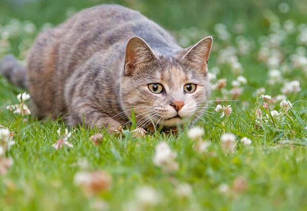 Je kat veilig naar buiten laten