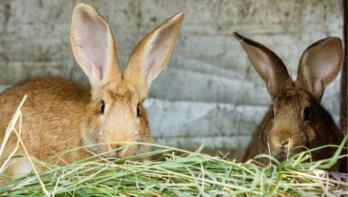 Goed hooi voor konijnen