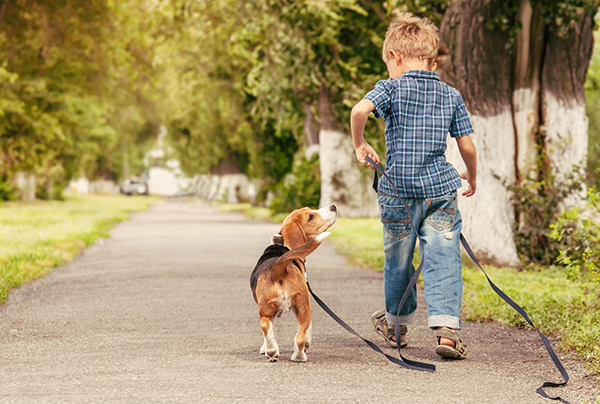 Basisregels voor kind en hond