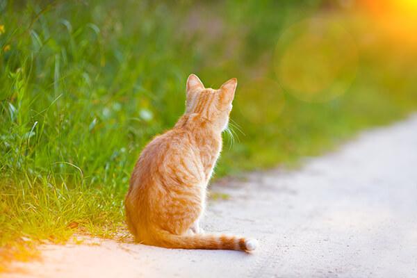 kat veilig buiten