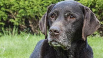 Oude hond verzorgen: tips!