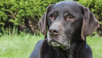 oude hond tips verzorging beweging