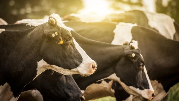 Nationaal hittenplan voor vee-industrie gevraagd