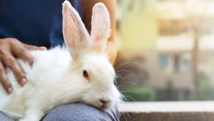 Is mijn konijn ziek? De gezondheidscheck