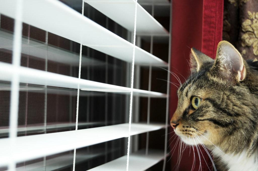 meer katten huis alleen vriend soortgenoot