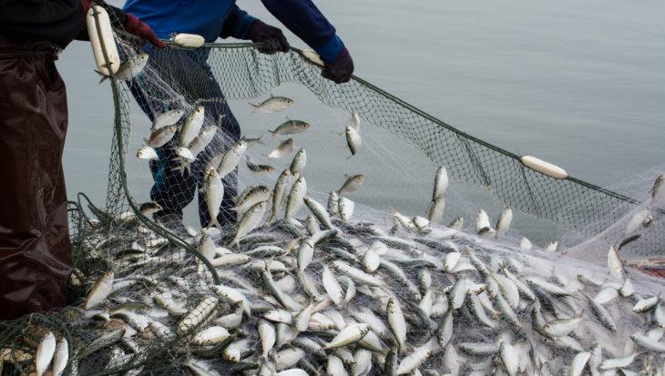 Kom in actie voor de vissen!