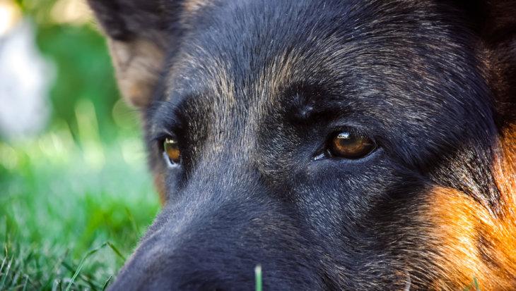Heeft mijn hond chronische pijn?