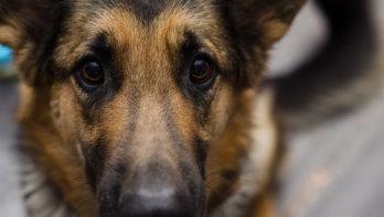Vergiftiging bij honden