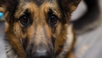 vergiftiging hond