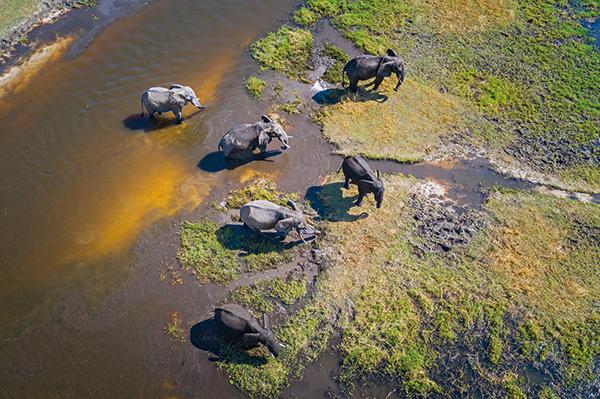 olifant klimaatverandering