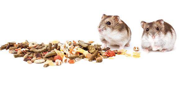 hamsteren voeding