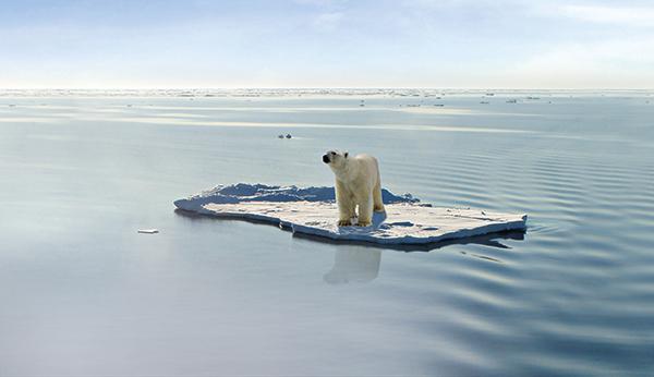 ijsbeer klimaatverandering