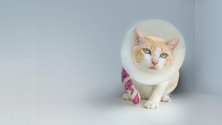EHBO voor de kat