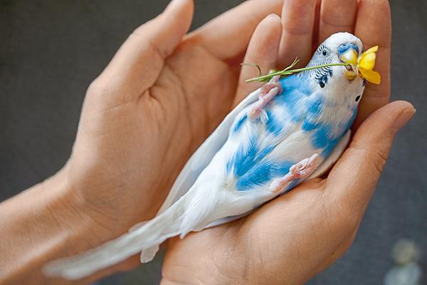 Vogel oppakken en vasthouden – zo doe je dat