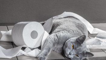 Darmproblemen kat