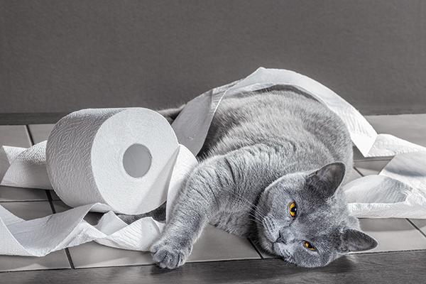 Darmproblemen bij de kat