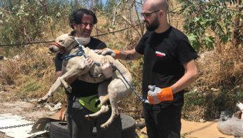 Dieren redden in Beiroet