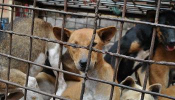 Reddingsactie honden