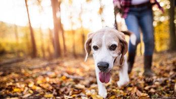 Hondenwandeling voor het goede dierendoel