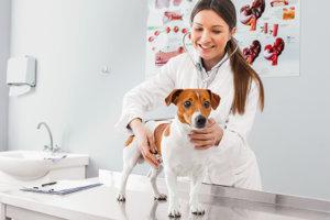 onderzoek hond dierenart