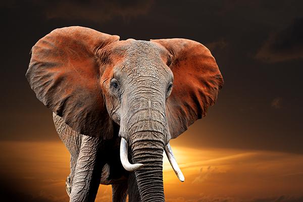 12 augustus 2020: Wereld Olifanten Dag