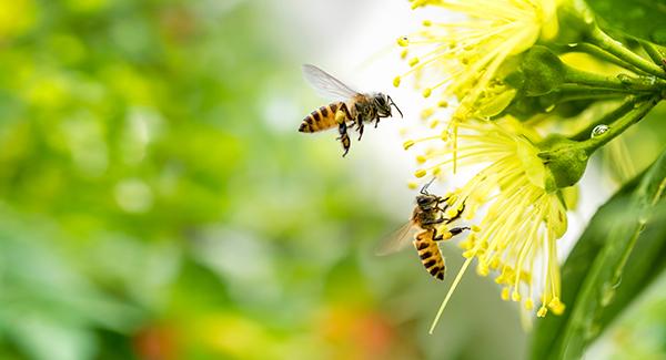 bijen klimaatverandering