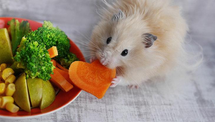 Gezond hamsteren: goede voeding voor een gezonde knager
