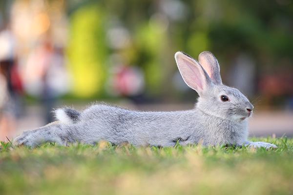 konijn hitte verkoeling