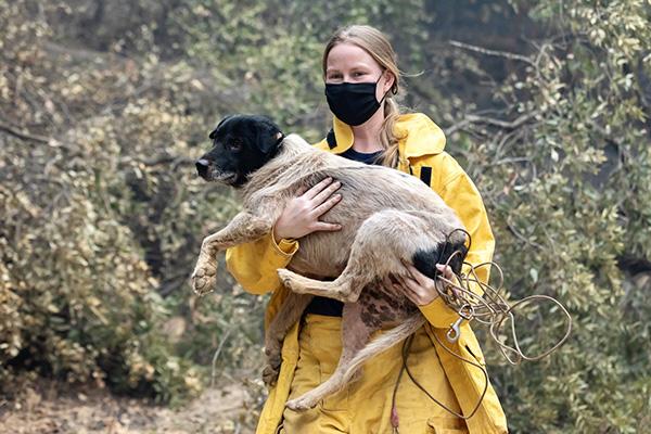 IFAW in actie voor dieren bij bosbranden Californië