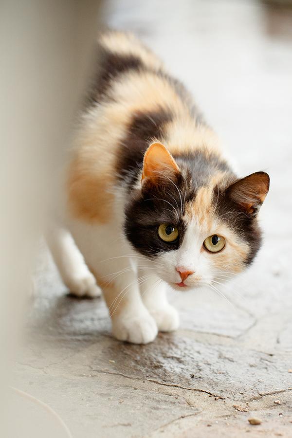dwangmatig gedrag kat