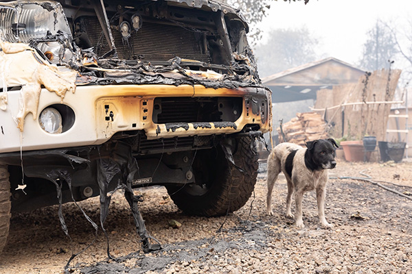 IFAW bosbranden