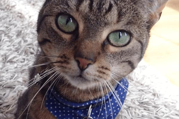Verhuisdier van de week: Tommie